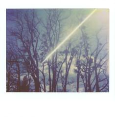 A Starburst (sycamoretrees) Tags: analog beam colorspectra colorspectra201705 creativeeffectskit film impossible instantfilm integralfilm light marianrainerharbach polarizingfilter polaroid polaroidoriginals robinia robiniapseudoacacia specialeffectskit spectra starburstfilter trees