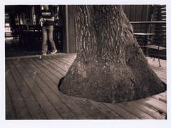 Accommodate (Robert Drozda) Tags: portland oregon northportland blackbirdpizza tree deck porch trunk film ilfordhp5 olympusxa2 bluemooncamera drozda