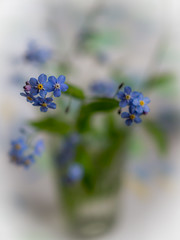 here we are! (marinachi) Tags: forgetmenot flowers blue white green closeup bokeh spring may