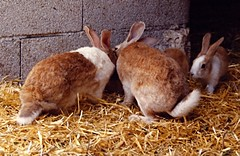 Rabbits (BrooksieC) Tags: rabbits farm animals corral spain