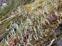 Photo of Lichen & Moss