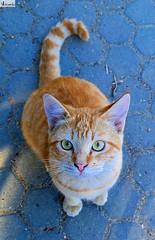 Gatita Linda. (In Dulce Jubilo) Tags: andalucia andalusia animal animals cat gato photography pet kitten ojos eyes naturaleza nature nice linda gatita spanien spain espagne españa fotografía
