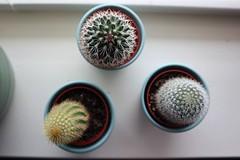 IMG_0006 (lpatxl) Tags: cactus cacti plants houseplants macro amateur canon eos m100
