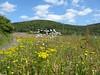 Wildflowers near Loch Leven