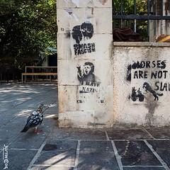 Even the pigeon seems interested in the graffiti around Crete. · · · · · #crete #graffiti #greece #graffitiart #creteisland #streetart #chania #graffitiporn #cretegreece #urbanart #kreta #graffitiwall #crète #art #sea #graffitiartist #crête #graffitilife (justin.photo.coe) Tags: ifttt instagram even pigeon seems interested graffiti around crete · greece graffitiart creteisland streetart chania graffitiporn cretegreece urbanart kreta graffitiwall crète art sea graffitiartist crête graffitilife travel graffitiofourworld cretelife graffitiworld chaniacrete streetarteverywhere cretesenesi instagraffiti justinphotocoe