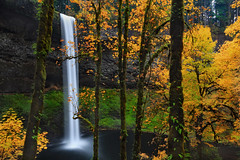 Yellow Fireworks (Ian Sane) Tags: ian sane images yellowfireworks yellow leaves fall autumn colors silverfallsstatepark southfalls sublimity oregon nature wilderness photography landscape canon eos 5ds r camera ef1740mm f4l usm lens