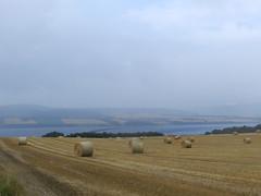 Hay Bales, Culbokie, Black Isle, (allanmaciver) Tags: hay bales culbokie black isle cromarty firth misty farmer field rows random allanmaciver