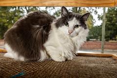 Javacatscafefinal19Oct201918.jpg (fredstrobel) Tags: javacafecats javacatscafe atlanta places animals ga pets cats usa georgia unitedstatesofamerica