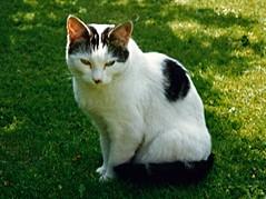 Mitzi (BrooksieC) Tags: pet cat garden pretty feline