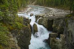 Sunwapta Falls (Bernie Emmons) Tags: sunwaptafalls jaspernationalforest waterfall river trees water rocks green blue rapids alberta canada