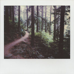 Hoyt Arboretum, Portland (H Polley) Tags: polaroid spectra instantfilm portland polaroidoriginals polaroidweek