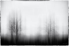 Don't be afraid... (Ody on the mount) Tags: abstrakt anlässe bäume em5ii fototour landschaft omd olympus pflanzen rahmen schwäbischealb abstract bw blackandwhite frame landscape monochrome photoshop sw schwarzweis trees