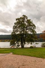 Im Kurpark von Titisee (lt_paris) Tags: urlaubimschwarzwald2019 schwarzwald titisee gewässer see kurpark baum