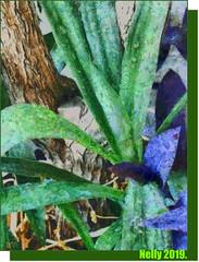 *Fall... (MONKEY50) Tags: art digital colors green autumn fall plant pentaxart nature leaf leaves plants psp macro yucca succulent exoticimage netartii artdigital awardtree greenscene flickraward hypothetical musictomyeyes autofocus pentaxflickraward contactgroups