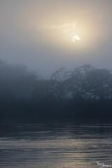Sunrise (Kusi Seminario) Tags: landscape paisaje sun sol amanecer river rio reflejo reflection fog nublado neblina cloudy madrededios tambopata peru perú southamerica sudamerica nature naturaleza outdoors amazon amazonia amazonas rainforest selva jungle