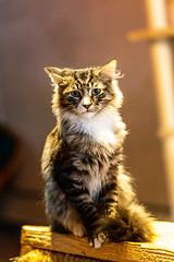 Javacatscafefinal19Oct20195.jpg (fredstrobel) Tags: javacafecats javacatscafe atlanta places animals ga pets cats usa georgia unitedstatesofamerica