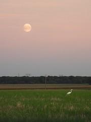 Présence du soir sur le plateau du Hurepoix. (jmsatto) Tags: soir campagne champs hurepoix lune grandeaigrette gometzlaville essonne