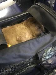 Louie ready to go !
