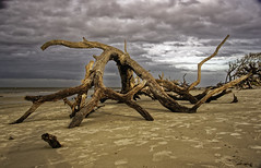 Project 365 - 10/19/2019 - 292/365 (cathy.scola) Tags: project365 driftwoodbeach jekyllisland georgia sand water clouds beach driftwood