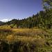 Hope Valley meadow, Sierra Nevada, Northern California