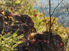 20191019_170255_HDR (photodittmer) Tags: mttom massachusetts pioneervalley fall autumn forest outdoors color berry red rock stone cliff valley mountian