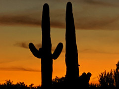 October Sky (oybay©) Tags: arizona sunset monsoon cloudy clouds saguaro cactus silhouette color colors nature natural orange yellow red purple outdoor sky dusk cloud city tree