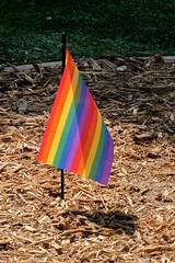 PZ20191015-114.jpg (Menlo Photo Bank) Tags: flag quad menloschool 2019 upperschool fall rainbowflag event photobypetezivkov atherton ca usa