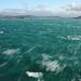 Windy Wellington (b.landscape) Tags: