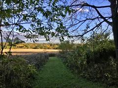 Path to the Prairie (ggppix) Tags: savanna prairie autumn wisconsin madison owenconservationpark