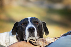 Pet me (Boered) Tags: dog backyard boomer carl