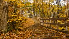Automne, autumn - Sentier, Parc Chauveau - Québec, Canada - 4940 (rivai56) Tags: activités extérieures sentiers de la ville québec automne autumn sentier parcchauveau canada 4940