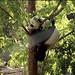 Panda Bei (pattie7459) Tags: ccncby smithsonianscreenshot nationalzoo pandabei