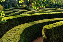 In the Maze 292 of 365 (Year 6) (bleedenm) Tags: arboretum fall outdoors illinois october olli lisle 2019 mortonarboretum