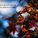 Camus Quote Autumn- (Jeffrey Balfus (thx for 5.5M views)) Tags: sony90mm autumn colors sonya9 losgatos california unitedstatesofamerica inexplore explore