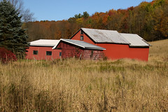 Reds (Diane Marshman) Tags: barn buildings red siding gray metal roof lattice windows field fall foliage trees hill mountain orange yellow green color colors weeds grass rural setting scene pa pennsylvania nature blue sky autumn season pine tree leaves