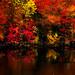 Minnesota in Autumn (jmayramaker) Tags: fall leaves colorful autumn minnesotaautumn minnesota minnesotaphotographer canondslr reds oranges reflection water seasons beautiful rainy rain landscape trees foliage