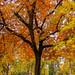 Boise Fall (Explored 10/20/2019) (fandarwin) Tags: boise fall foliage tree colors darwin fan fandarwin olympus omd em10