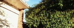 Perfekt, Velvia, Home 0004 (brett.m.johnson) Tags: 100iso camera claremont e6 fujichrome home horizonperfekt mtpleasant panoramic perth rossmoyne september2019 shelley slidefilmcameratest velvia westernaustralia