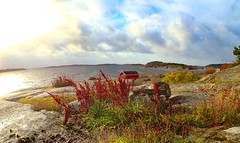 Autumn light. Hvaler. Norway.