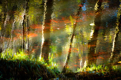 Reflected (tonguedevil) Tags: outdoor outside countryside autumn nature woodland forest trees reflections ripples water river hamsterley colour light shadows sunlight