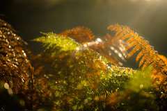 Illuminating (tonguedevil) Tags: outdoor outside countryside autumn nature field bracken bokeh morning colour light shadows sunlight sunrise