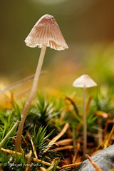 20191019-10 oktober-8 (mgmargot) Tags: 2019 europa mook nederland bos herfst macro natuurenlandschap oktober paddenstoelen seizoenen waar wanneer wat