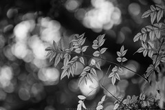 Leaves (imtiazchaudhry) Tags: leaves autumn dry color bokeh monochrome detail lines light contrast beautiful weathers