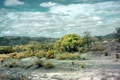 south african bush Kruger National Park magnificent infrared landscape ******* (andrewantipin) Tags: landscape africa kruger southafrica infrared clouds
