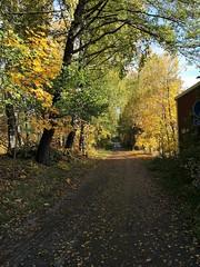 IMG_20191013_104221 (www.ilkkajukarainen.fi) Tags: suomi finland finlande eu europa scandinavia autumn syksy hösten 2019 helsinki visit travel travelling happy life line