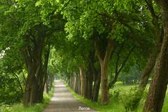 °Schöne Allee (J.Legov) Tags: bäume strase allee panasoniclumixdmczx31 mai 2019