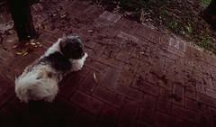 Perfekt, Velvia, Home 0006 (brett.m.johnson) Tags: 100iso camera claremont e6 fujichrome home horizonperfekt mtpleasant panoramic perth rossmoyne september2019 shelley slidefilmcameratest velvia westernaustralia