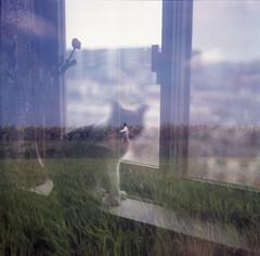 woman walking in sunflowers cat in window double exposure film photo (yourdadsllama) Tags: doubleexposure medium format fujicolorsuperg100 fujifilm film