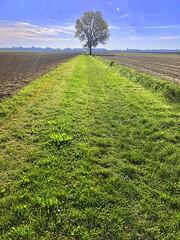 iph8202 (gzammarchi) Tags: italia paesaggio natura pianura campagna ravenna sanmarco strada sterrato albero pioppo