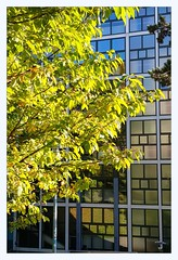 ERACOM north end (overthemoon) Tags: switzerland suisse schweiz svizzera romandie vaud lausanne eracom school college graphicarts windows park trees bauhaus 1955 ruedegenève flonvalley architecture